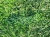 grass-compression-small.jpg